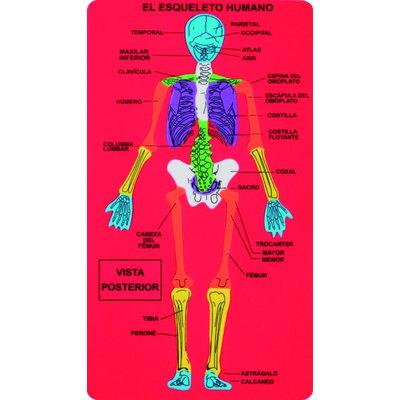 Puzle de goma eva esqueleto humano 68003500