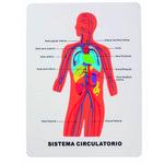 Puzzle de goma EVA Smart sistema circulatorio 68003300